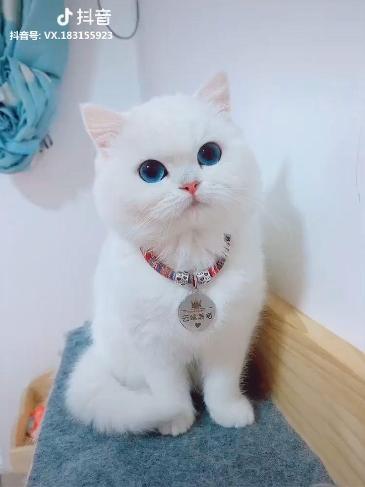 Soooo Suss Katze Tiktok Cutecat Pet Pets Bichinhos Fofos Gatinhos Fofos Gatos