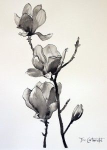 Tutorial (vu=ideo) of pen and ink drawing of Magnolias by Joe Cartwright