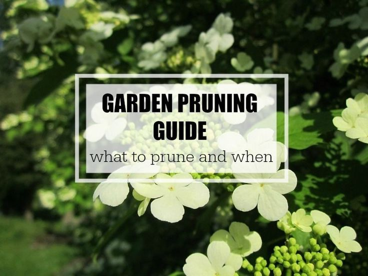 Garden Pruning Guide   List of easy to grow plants and when to prune from a DIY gardener.