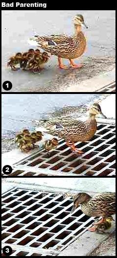 Only repinning to take the opportunity for this lame joke: that last one is a lucky duck!!
