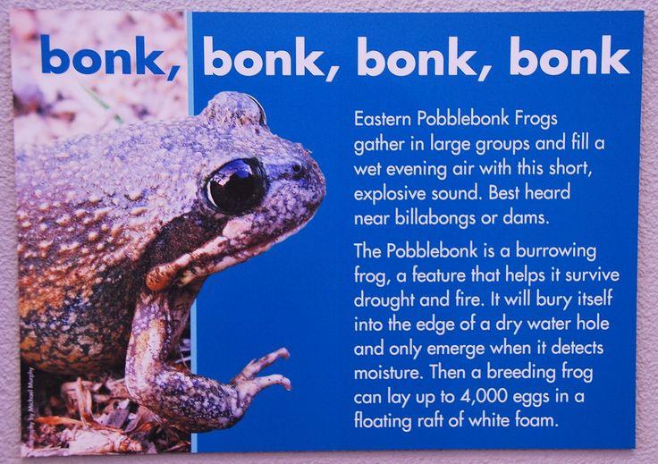 Funny Animal Names - The Bonk Frog! | The Travel Tart Blog