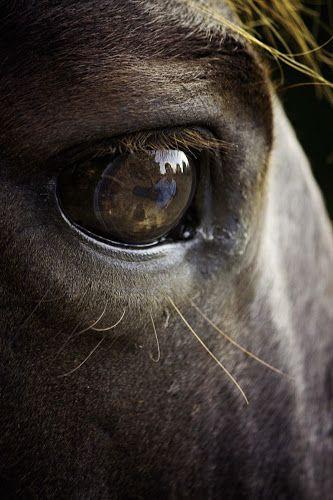 by Ken Gehring - Animals Horses ( reflection, ken gehring photography, arkansas photographer, horse, eyes )