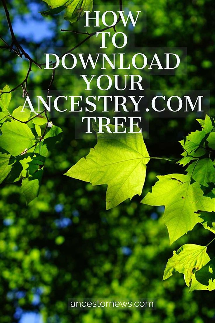Step-by-Step guide on downloading your Ancestry family tree http://ancestornews.com/download-ancestry-family-tree/?utm_campaign=coschedule&utm_source=pinterest&utm_medium=Nancy%20Hendrickson&utm_content=How%20to%20Download%20Your%20Ancestry%20Family%20Tree Illustrated and easy-to-follow. You'll have your tree downloaded in just a couple of minutes. (Unless, of course, your tree has 50,000 people in it!)