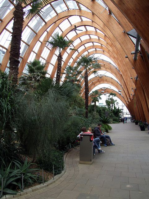 Sheffield Winter Gardens - Interior 02 (Glulam) by john stanbridge, via Flickr