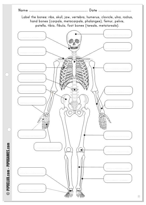El sistema óseo (anverso) - Colorea y escribe los nombres - Difícil - Primaria de El cuerpo humano con Pipo #huesos #primaria #medio #cuerpo #salud #biología #niños #educación