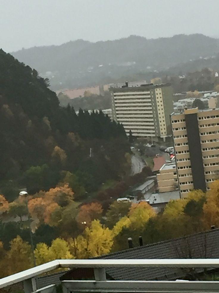 Wind fall day in Fyllingsdalen, Bergen, Norway.