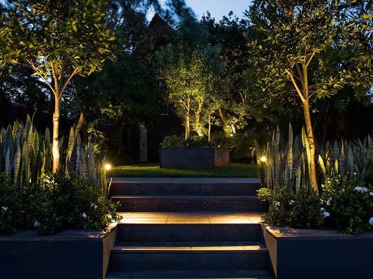 Uplighting on feature trees. Maroubra , NSW Australia. Anthony Wyer + Associates www.anthonywyer.com