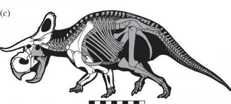 Le nouveau dinosaure au mystérieux gros pif