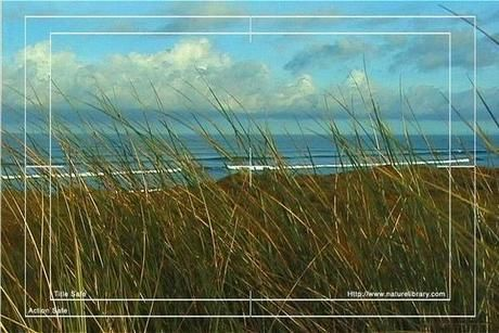 Royalty Free Stock Footage: New Zealand Surf Beach: NL00013
