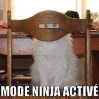 Images Le chat qui se croit invisible Images drôles Photos Animaux sur Humour.com