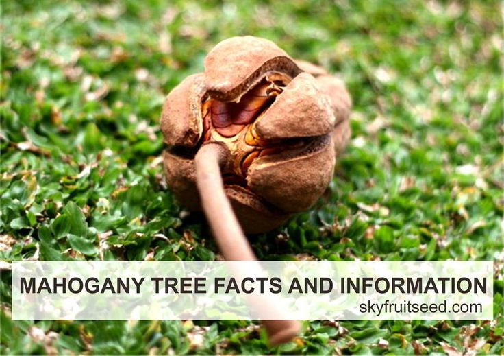 Important Facts and Information about Mahogany