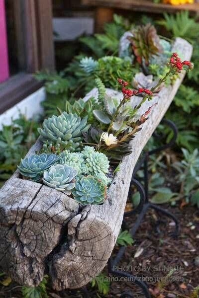 Succulents are effortless to maintain and look SO beautiful!