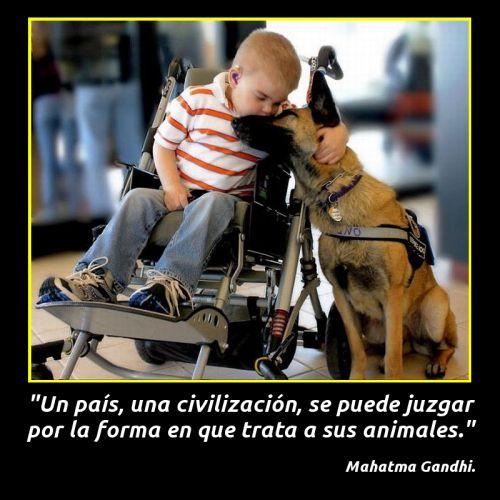 Amor entre perros y personas