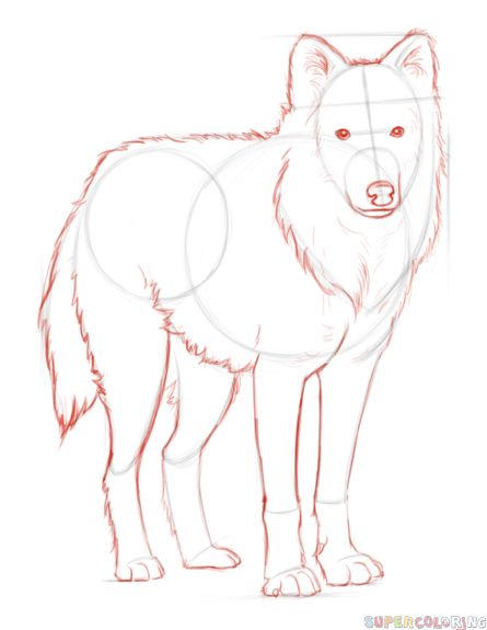 How to draw an arctic wolf | Step by step Drawing tutorials