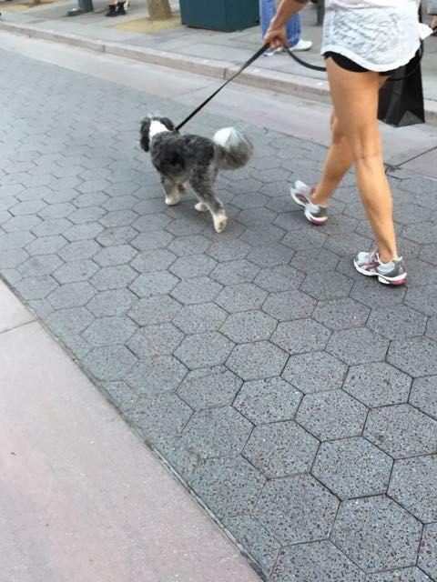 Pet-friendly neighbourhood