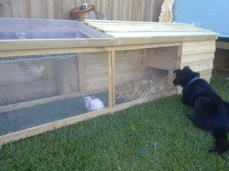 How to build a outdoor rabbit hutch plans woodworking projects plans - How to make a rabbit cage ...
