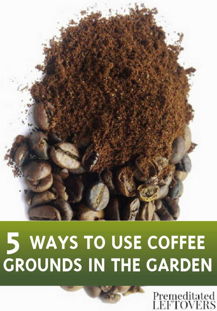 5 ways to use coffee grounds in your garden gardens estate agents and eggs for How to use coffee grounds in garden