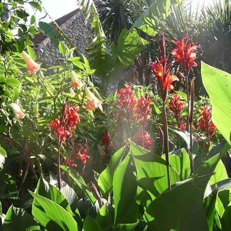 111 best ideas about subtropical garden on pinterest