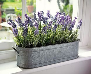 Enjoy the country cottage charm of our lavender windowbox potted in antique style zinc planters