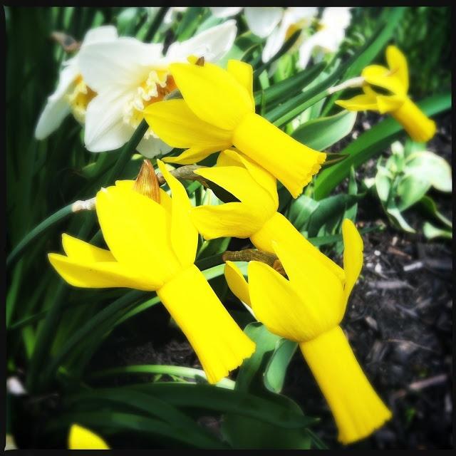spring yellows!