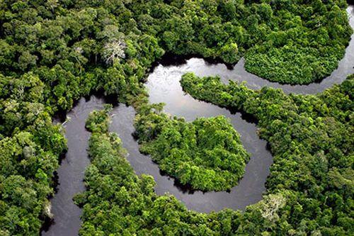 The Biggest Animals Kingdom Discovery: 10 Interesting Amazon ...