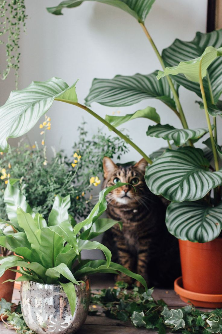 Peek-a-boo! a cat in the jungle. Healthy looking green plants as a part of  an urban jungle.