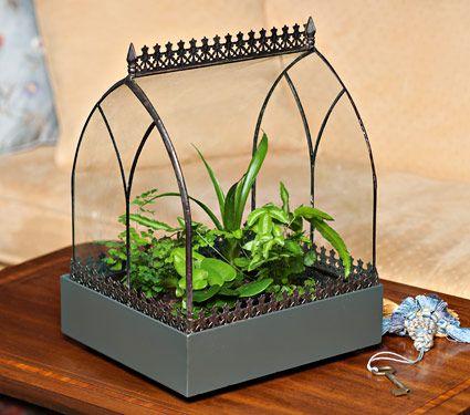 534 best images about terrarium on pinterest terrarium. Black Bedroom Furniture Sets. Home Design Ideas