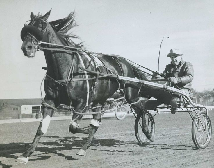 62 Best Harness Racing Images On Pinterest