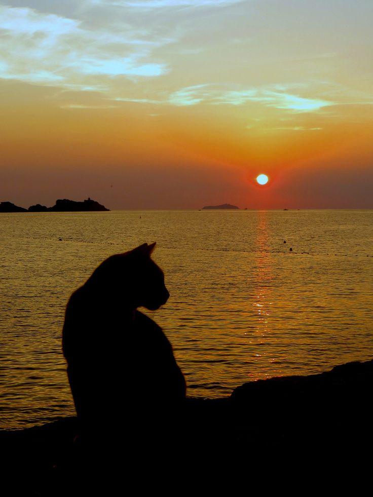 A sunset cat in Oia village, Santorini island, Greece