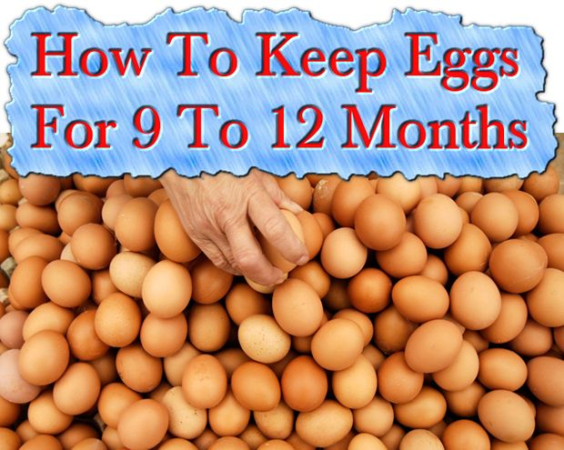 How To Keep Eggs For 9 To 12 Months Read HERE --- > http://www.livinggreenandfrugally.com/how-to-keep-eggs-9-to-12-months/