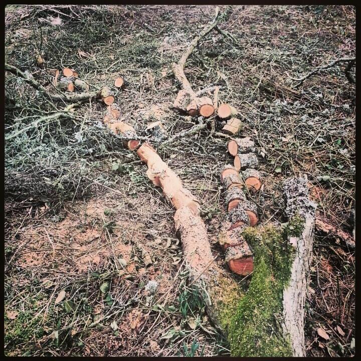 Chopped damson tree. It was dead.