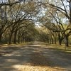 The beginning of the 1.5 mile oak avenue, lined with 400 trees planted in the 1850's.  Savannah GA