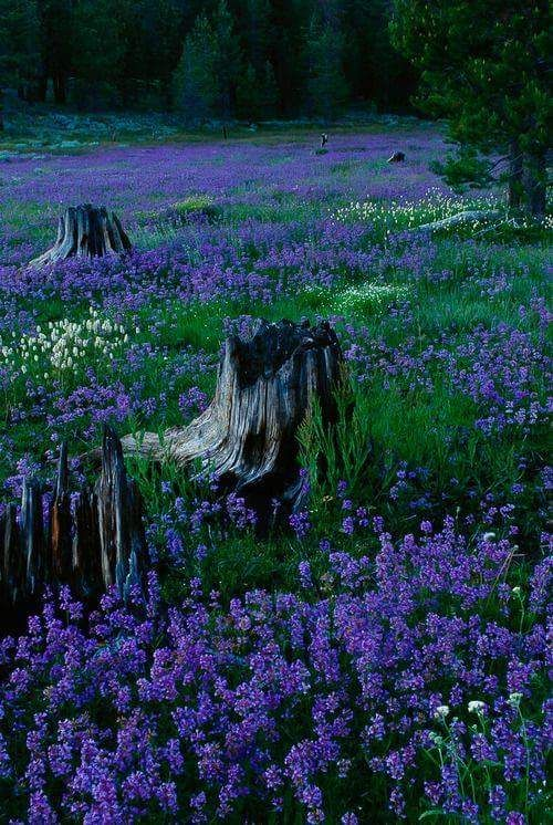 Beauty in the Woods | Wildflowers