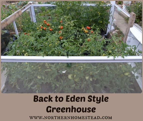 Back To Eden Style Greenhouse Outdoor Rooms The Back And Back To
