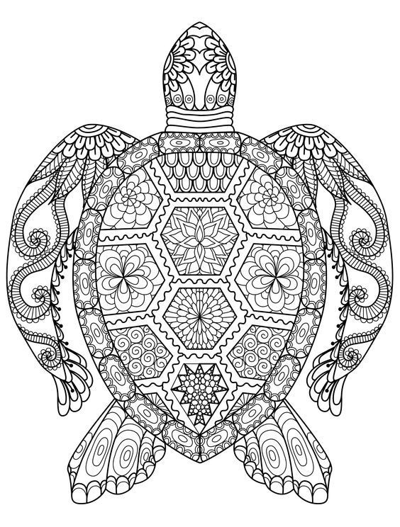 turtle zentangle coloring page - Zentangle Coloring Book