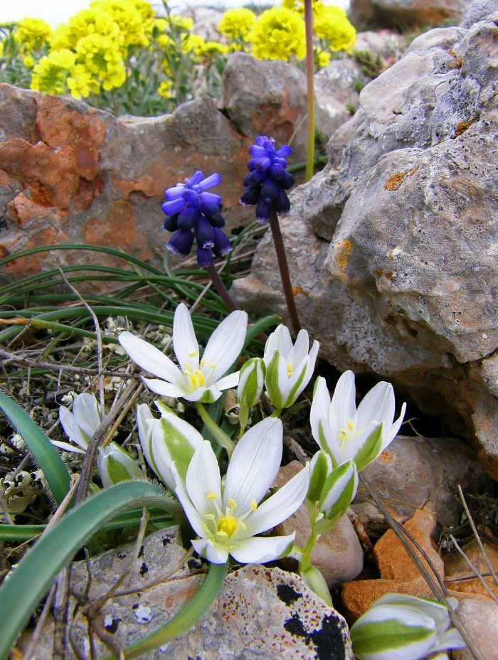 Розы букет, крымские растения фото и названия