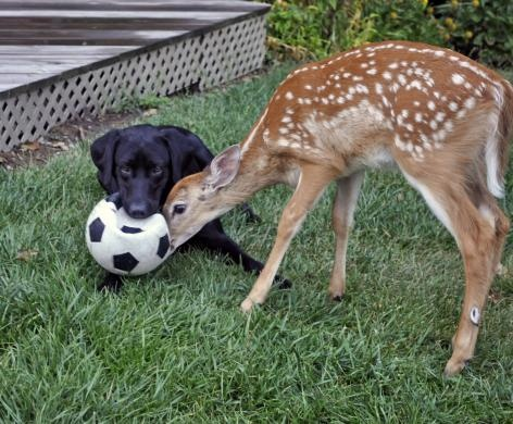 Unlikely friends playing soccer! #specialmoments
