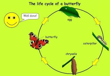 De cyclus van een vlinder powerpoint een proces of kringloop. de cyclus van water:water verdampt;er vormen zich wolken;uit de wolken valt regen op de grond; het water verdampt.