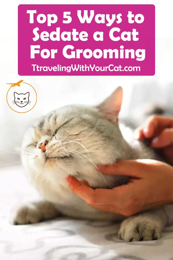 Top 5 Ways To Sedate A Cat For Grooming Cat Grooming Styles Cat Grooming Cat Grooming Tools