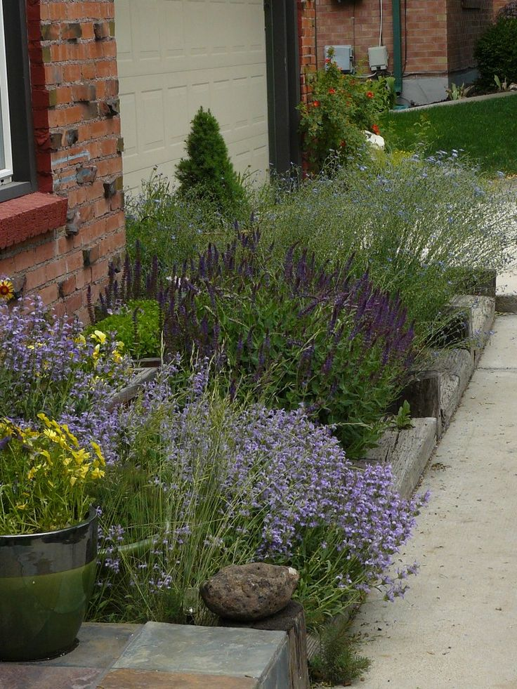 xeriscape yard ideas 13 best xeriscape images on pinterest backyard ideas garden