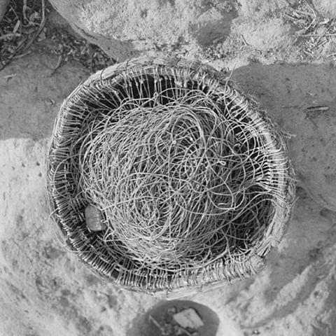 #Discoveringsummer through the #BenakiMuseum. #collections : A #bucket full of #fishbaits on the #Lesvosisland, 1958. #Photo by Dimitriadis Harrisiadis. Benaki Museum #PhotographicArchives #summer #instasummer #greeksummer #greekisland #greece #grecia #ig_greece #gf_greece #sea #sun #beautiful #fishing #island #instagreece #instagood #instacool
