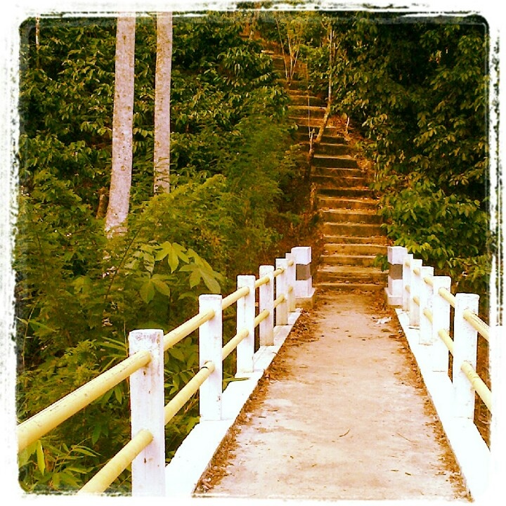 Stairway to the coffee field :-)