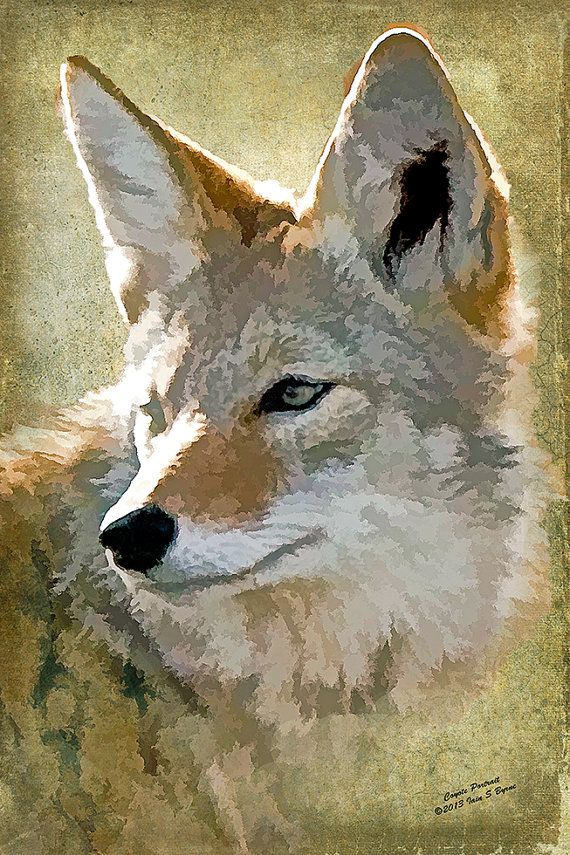 Coyote digital wildlife art fine art photography by IainSByrne, £8.50