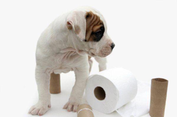 3 consejos para enseñarle a tu perro a hacer sus necesidades en el lugar…