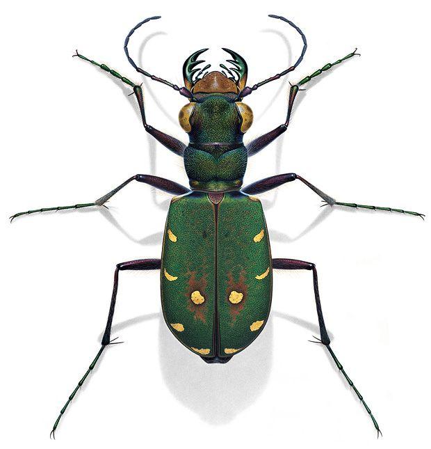 die besten 25 insekten ideen auf pinterest falter arten von motten und k fer. Black Bedroom Furniture Sets. Home Design Ideas