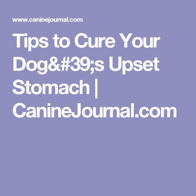 My Dog Ate Carpet Fibers: Best 20+ Dog Upset Stomach Ideas On Pinterest