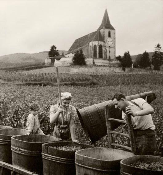 Vendanges à Hunawihr, Alsace,France,1945. Photo by Robert Doisneau