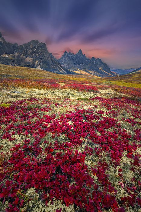 mstrkrftz:  Vertical Red Carpet by D&K Photography   (Tombstone Mountain, Yukon, Canada)