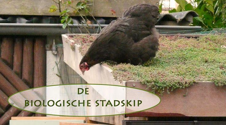 huis-tuin-en-keuken: C: Biologische kippen houden in de stad.