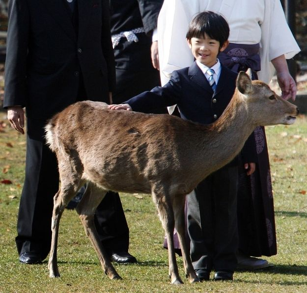 He is wearing a suit and tie and PETTING A DEER. I… just… can't… | 15 Adorable Photos That Will Make You Fall In Love With The Future Monarch Of Japan